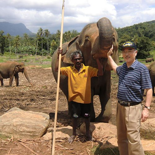 Endangered elephants!