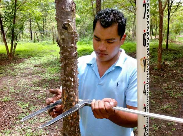 Biomass Carbon Offsetting Nicaragua